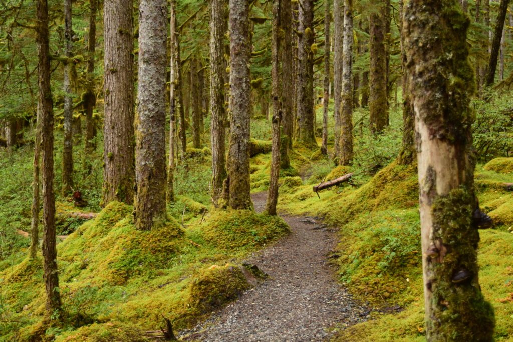 Forest trail in SouthEast Alaska
